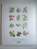 ภาพวาดงามธรรมชาติ : Ornamental Plants 1